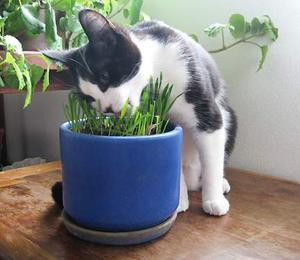 Как ухаживать за ядовитыми комнатными растениями?