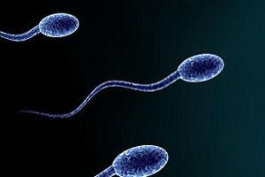 Мужские половые органы имеют вкусовые рецепторы