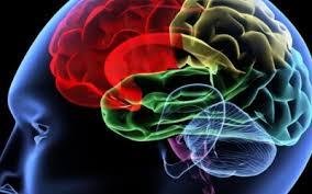 Апатия свидетельствует о болезни мозга