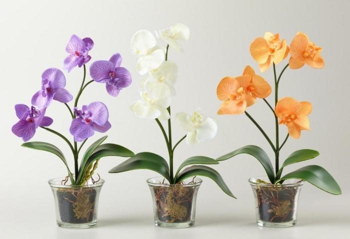 Как содержать дома орхидеи?