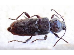 Радиоуправляемые насекомые