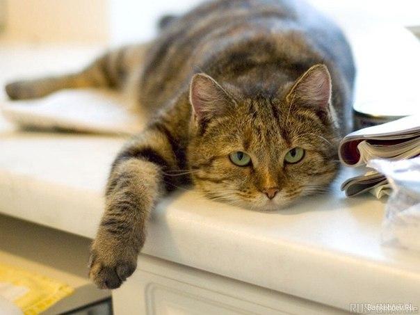 Ученые утверждают: человек так и не сумел приручить кошку