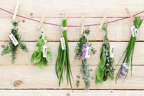 Какие травы помогут похудеть