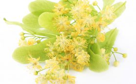 Душистые цветы липы: как применять?