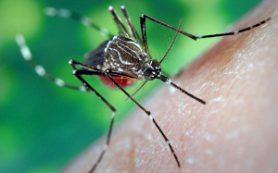 Укусы насекомых: как уберечься и что делать