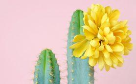 Я уколов не боюсь: косметика с экстрактом кактуса
