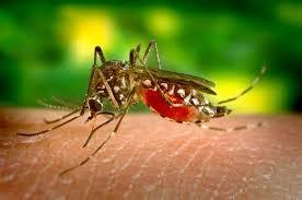Комары кусают вас чаще, чем других? У этого есть вполне научные причины