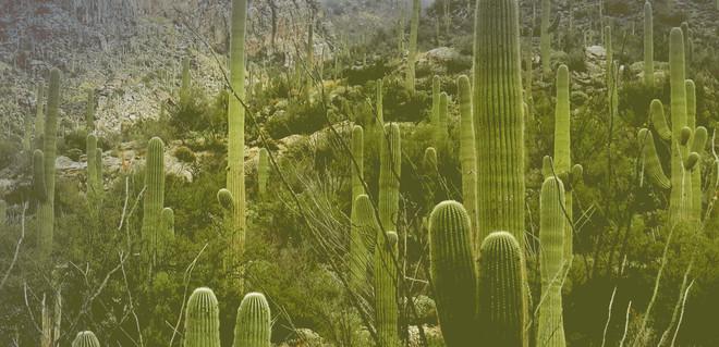 Бьюти-тренд: 6 средств с экстрактом кактуса