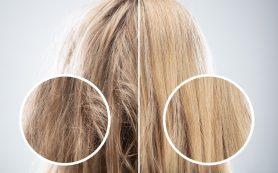 3 совета, как быстро восстановить волосы после зимы
