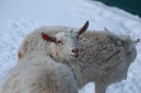 Неподходящая партия, или Любовь не картошка, полюбишь и козла
