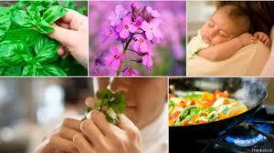 10 необычных ароматов из повседневной жизни