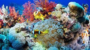 Как выбрать солнцезащитное средство, чтобы не навредить популяции кораллов