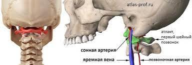 Советы остеопата: «правка атланта» – что это и надо ли